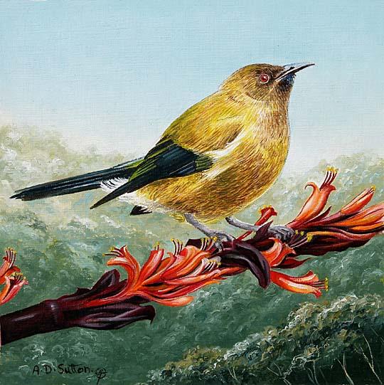 Native Bellbird art
