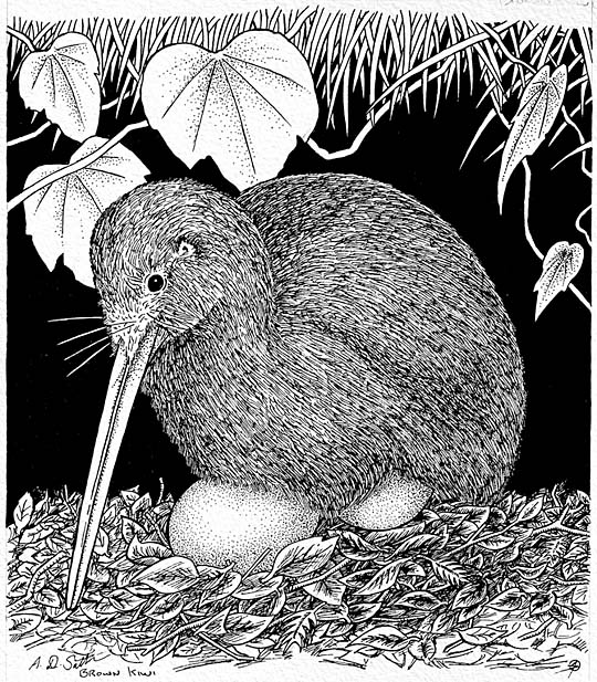 New zealand brown kiwi on a nest artwork