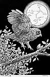 Morepork owl drawing