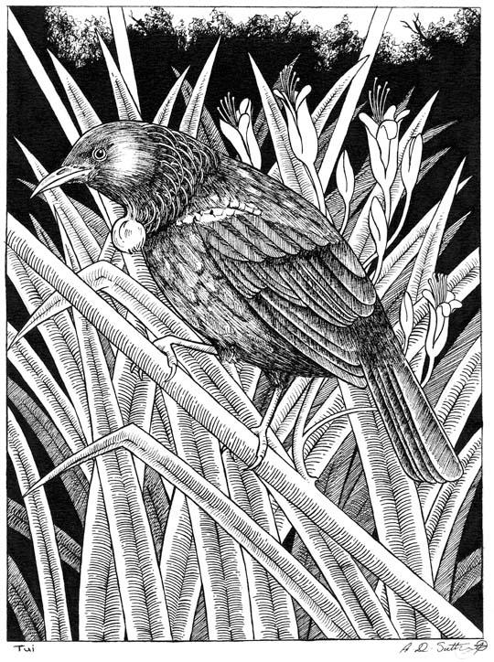 New Zealand Tui on flax bush artwork