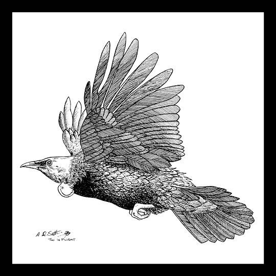 New Zealand Tui flying artwork