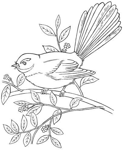 New Zealand Birds Conservation Coloring Book