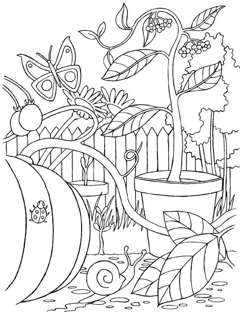 colouring picture of a vegetable garden