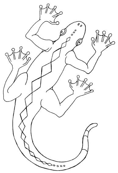 lizard reptile colouring picture